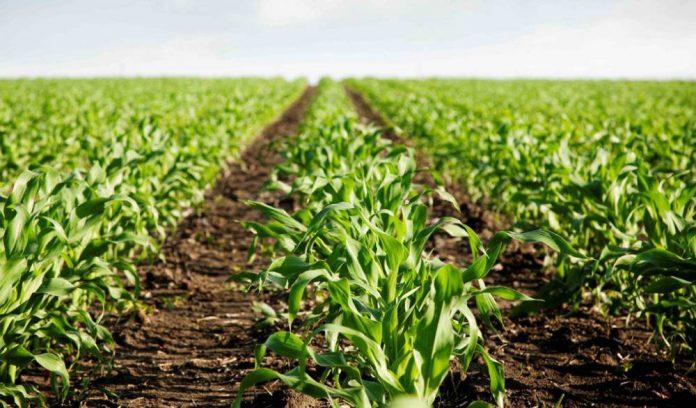 En la Secretaría de Producción y Desarrollo se realizará el censo agropecuario