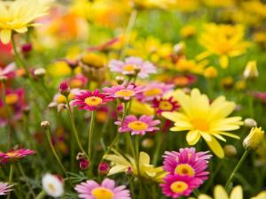 Comienzo Primavera