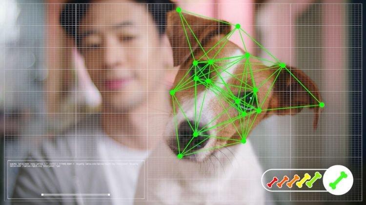 Tienda online de mascotas utiliza tecnología de reconocimiento facial para permitir que los perros hagan sus propias compras