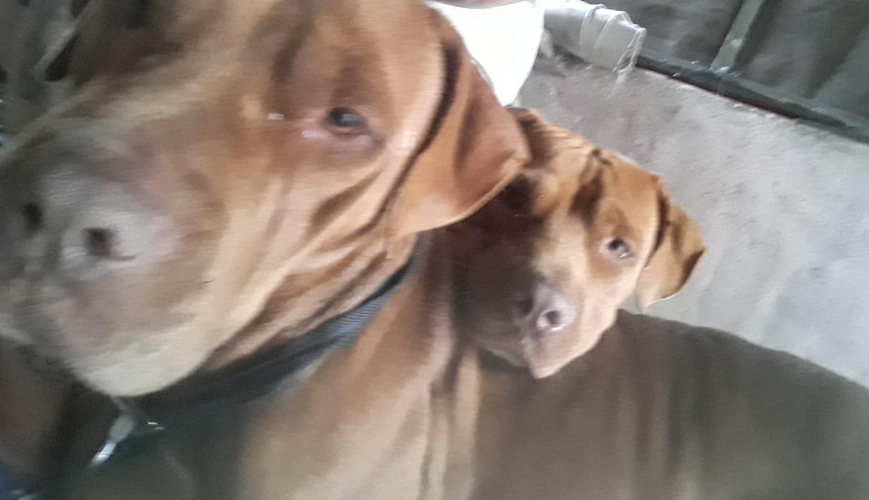 Mia y Teo
