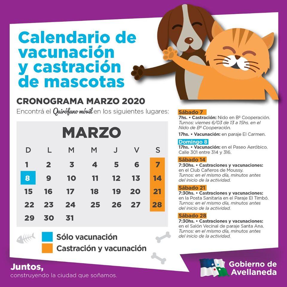 Castraciones y vacunación Antirrábica en Avellaneda