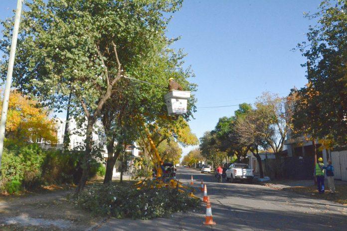 Avanza el plan de poda del arbolado público en Avellaneda