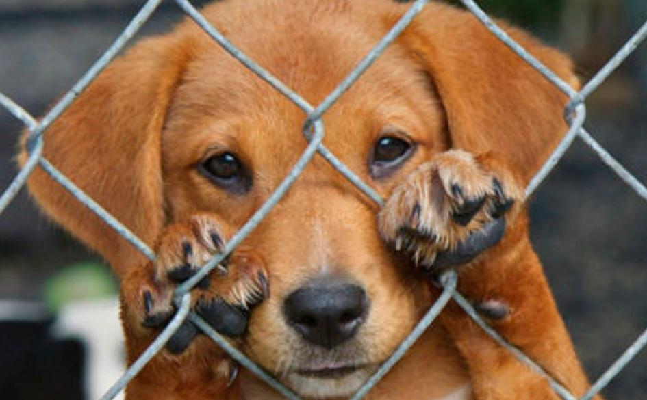 Villa Ocampo: se abrió una oficina de denuncias por maltrato animal