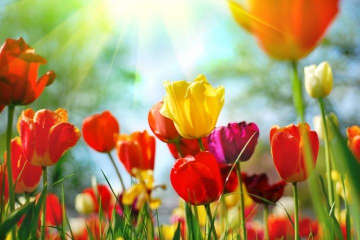 """La primavera """"astronómica"""" comienza mañana martes"""