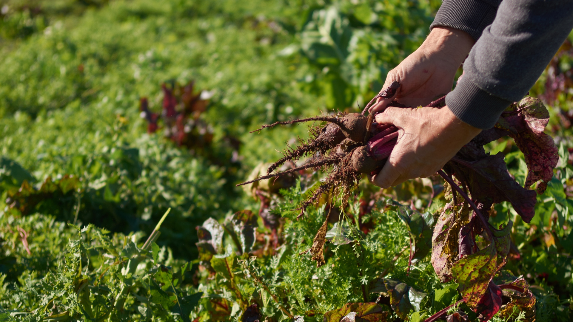 El Programa Huerta Familiar Santafesina permitió producir toneladas de alimentos saludables