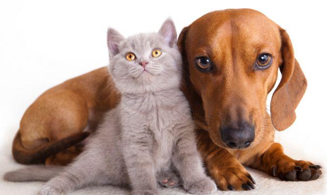 Vacunación y castración de mascotas