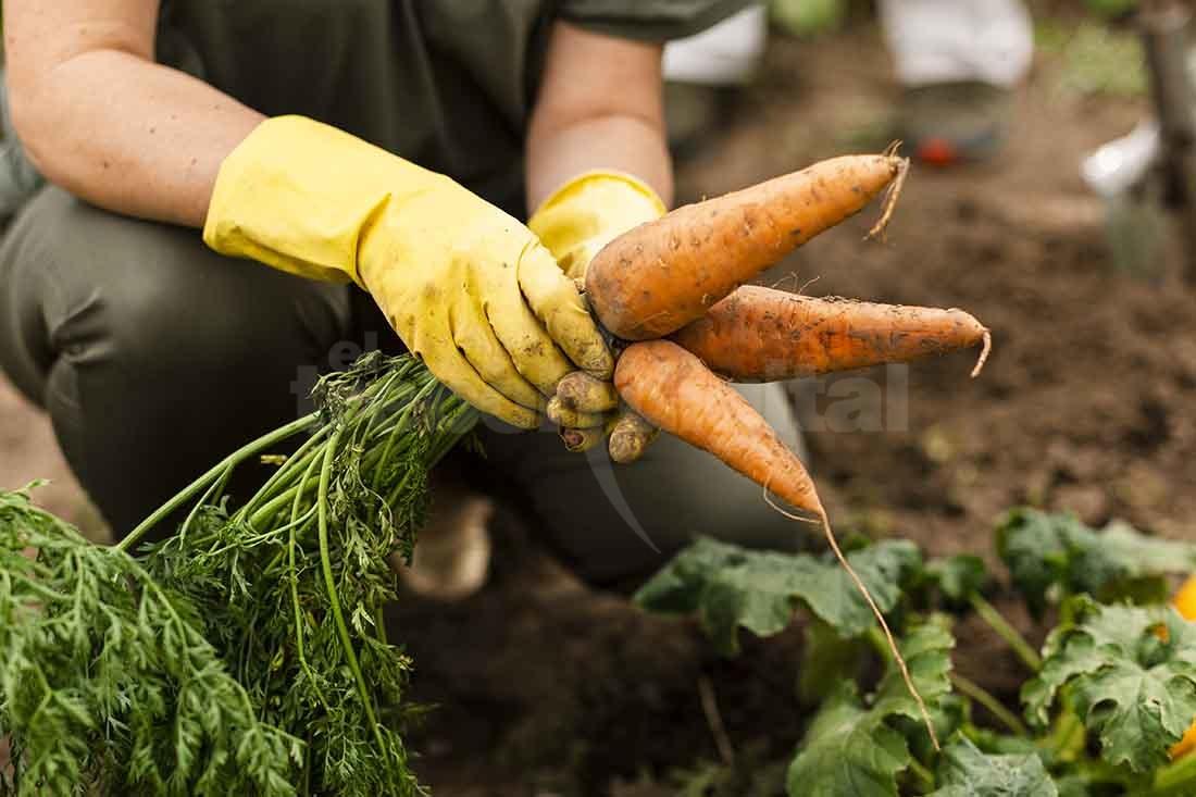 Continúan entregando semillas del Programa Huerta Familiar Santafesina