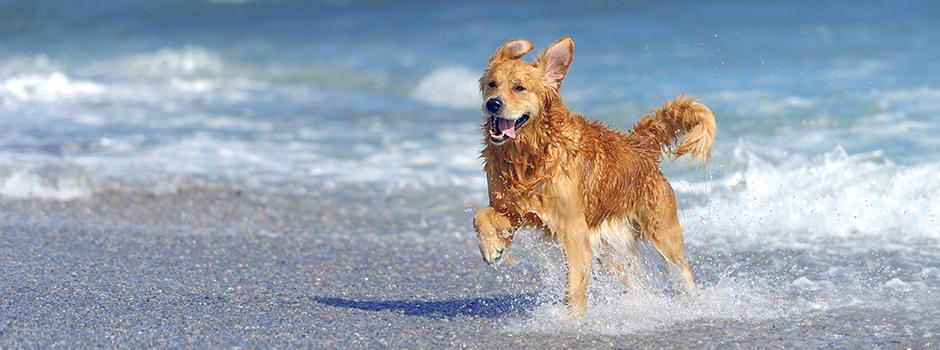 Qué tener en cuenta si vas con tu perro a la playa