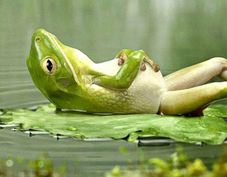 Hora de relax