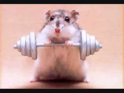 Haciendo gym