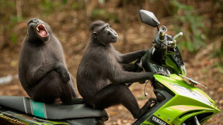 Paseo en moto
