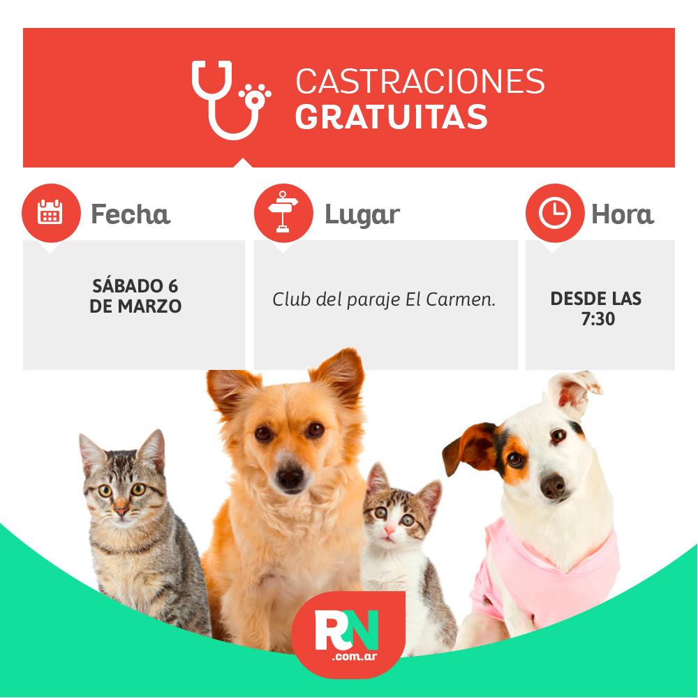 Castración de mascotas: comienza en el Paraje El Carmen