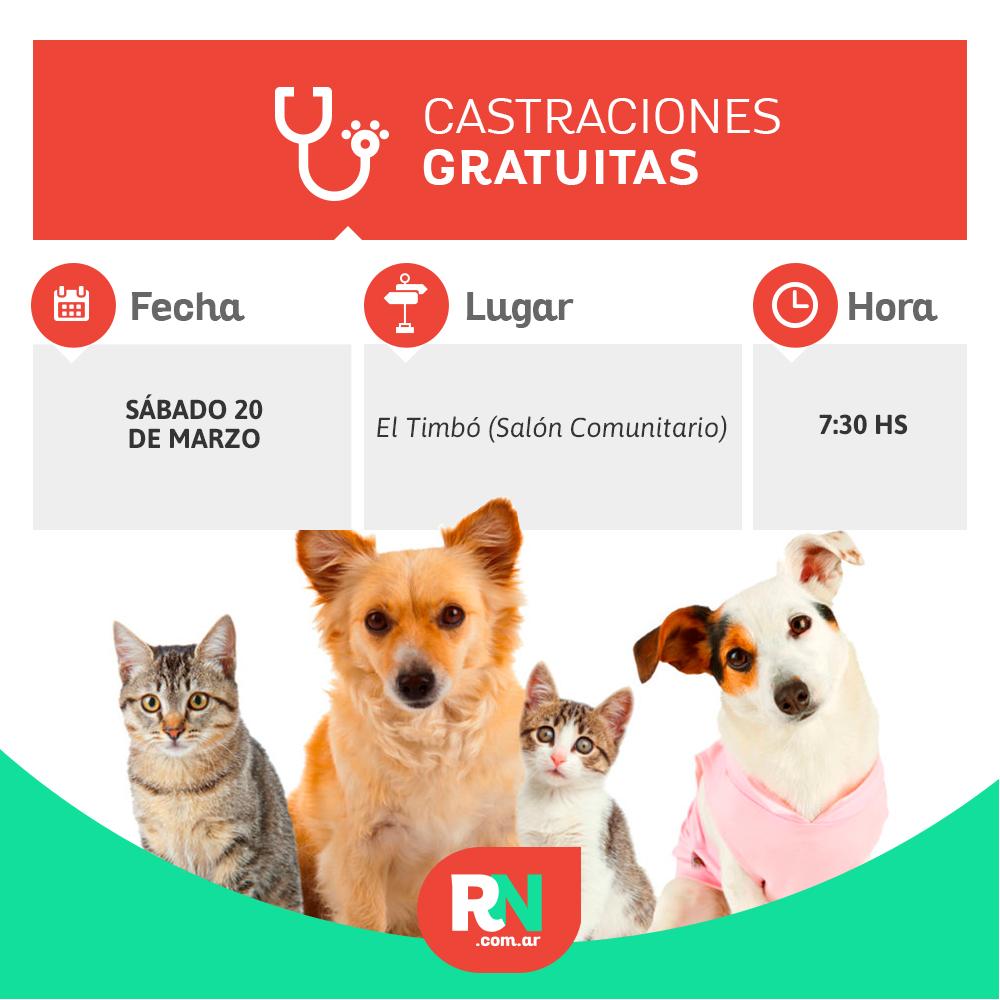 Castración de mascotas en Avellaneda: continúa en el Paraje El Timbó