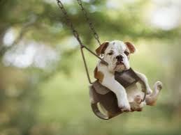 Perrito divirtiendose