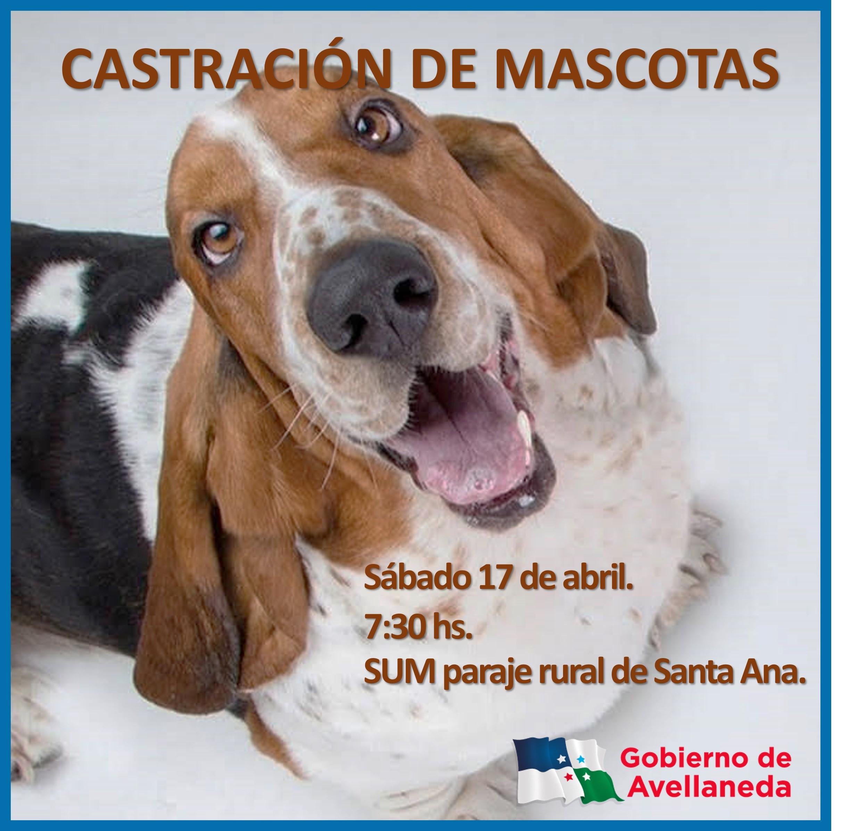 Castración de mascotas en Santa Ana