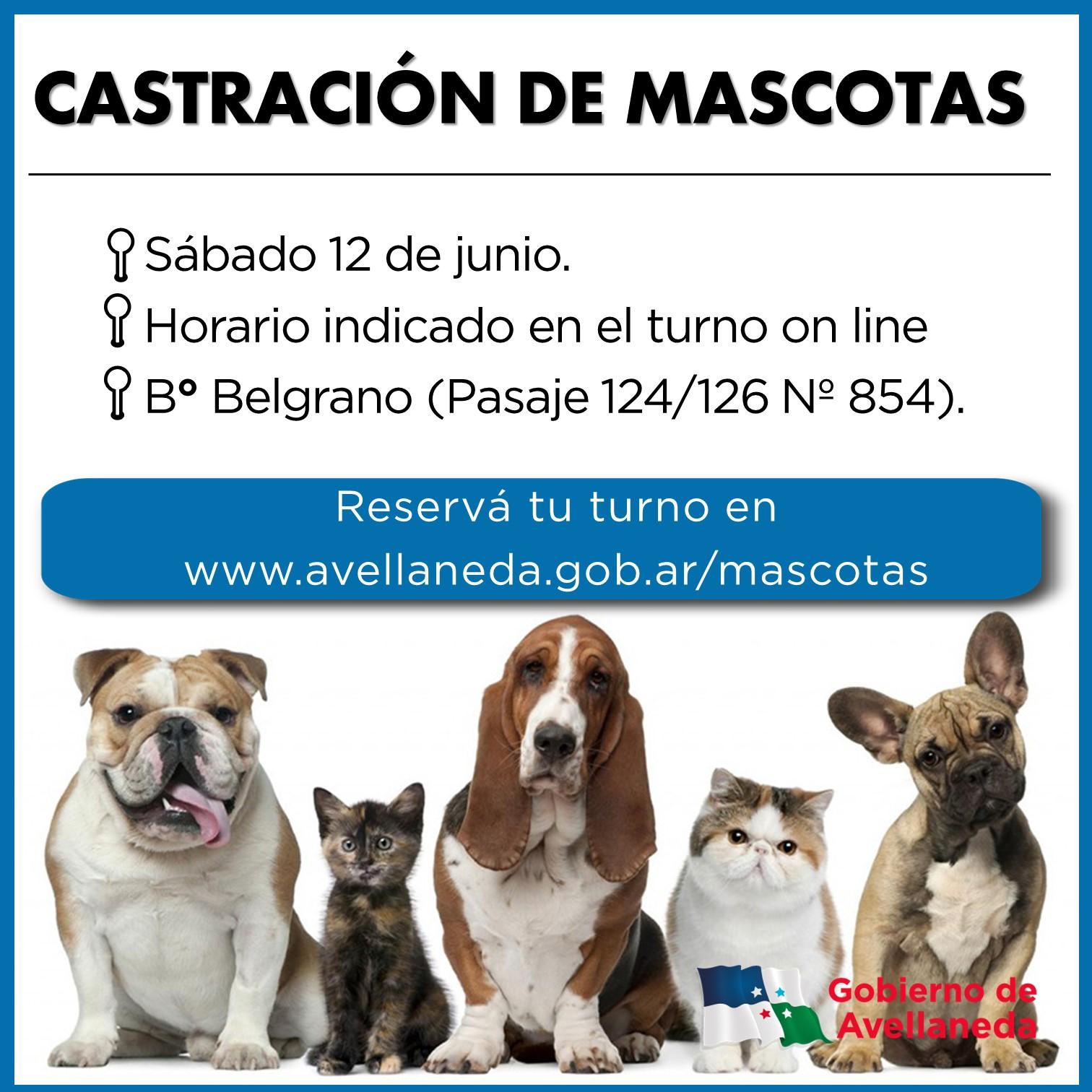 Castraciones de mascotas en Avellaneda