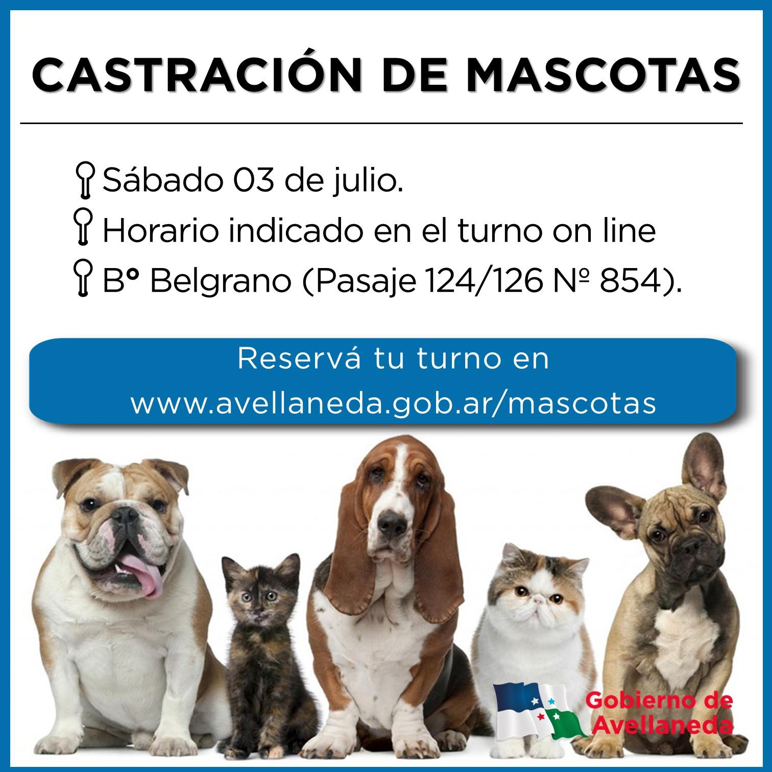 Castración de mascotas en Bº Belgrano