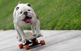 Perro skater