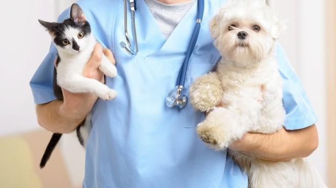 Vacunar a los gatos, la única manera de prevenir la rabia
