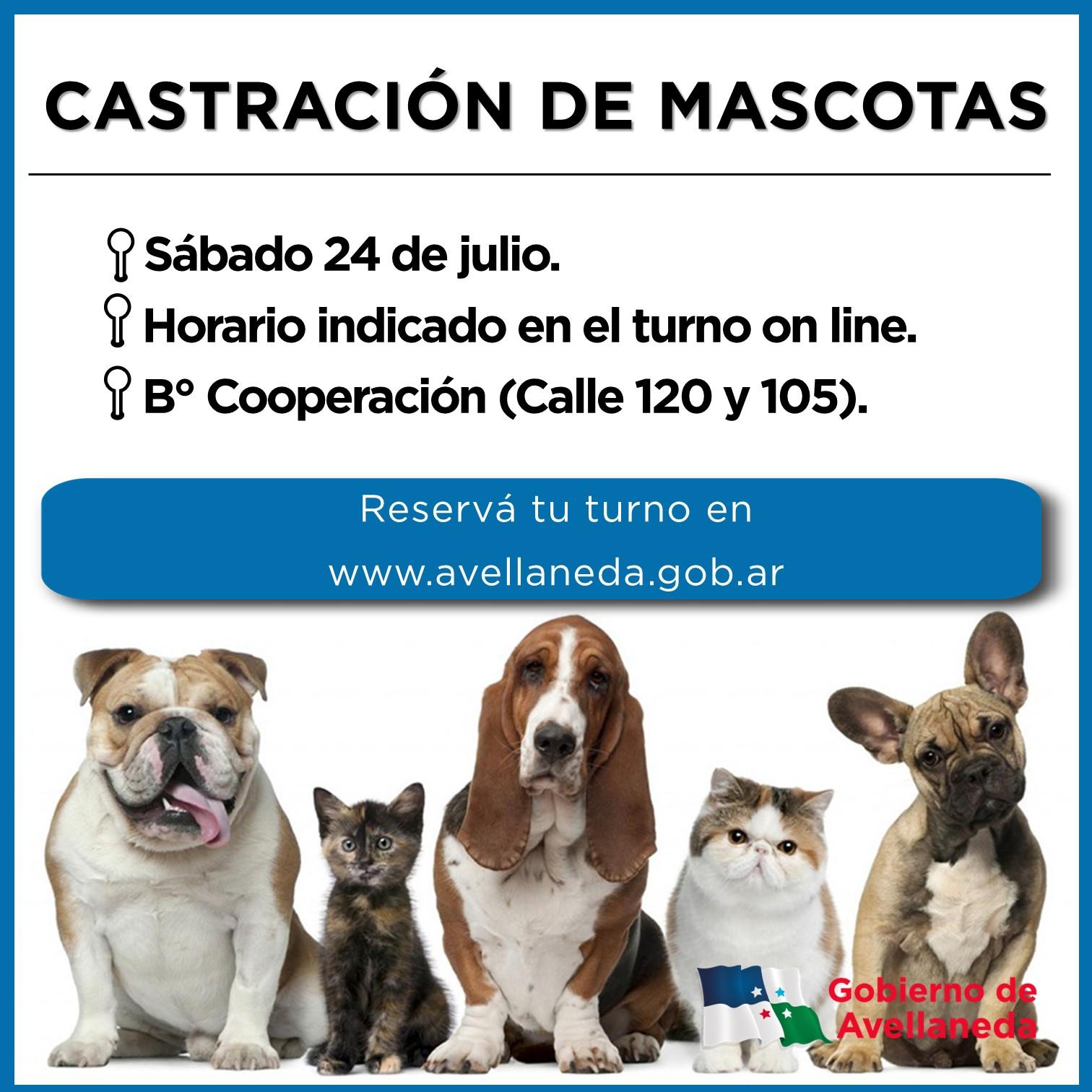Castración de mascotas en B° Cooperación de Avellaneda