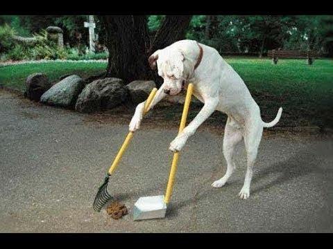 Día de limpieza